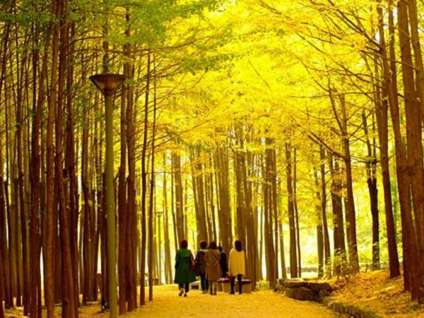 서울숲공원 관련 이미지