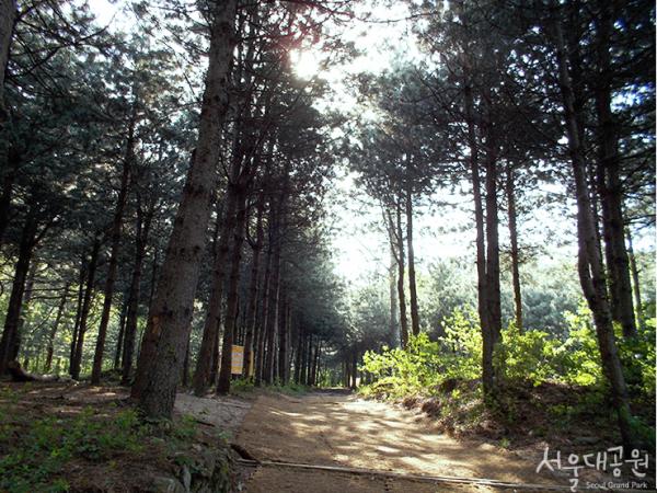 서울대공원 치유의 숲 관련 이미지